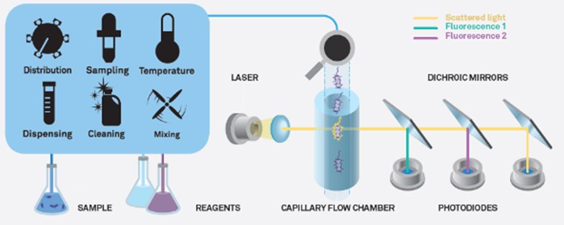 microfluidic-flow-cytometry-principle